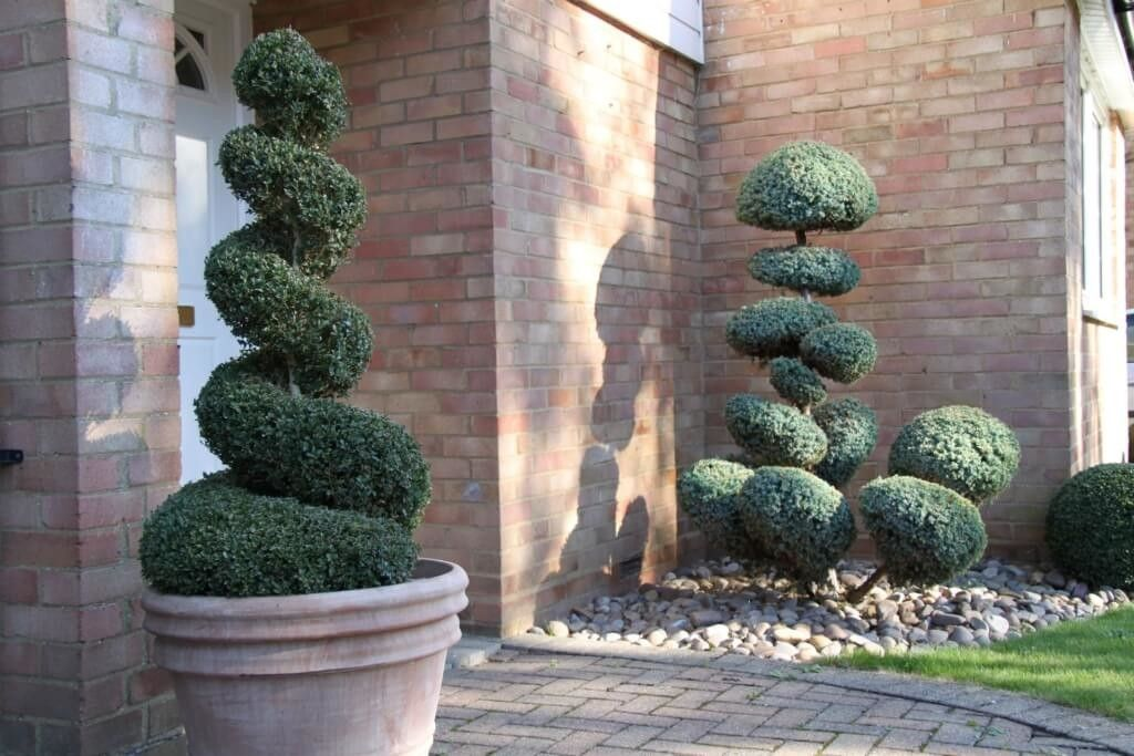 Home Decoration, Box Spiral Topiary In Planter With