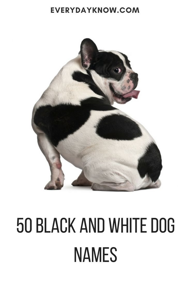 black and white dog names pet pinterest white dogs and dog