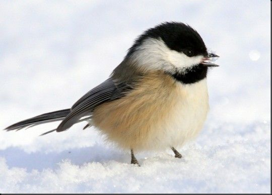 Winter Backyard Birds - Family Workshop (With images ...