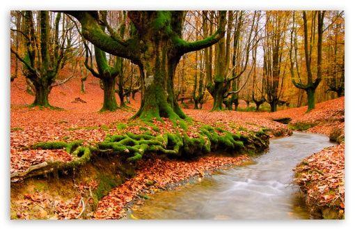 Download Strange Forest Autumn Hd Wallpaper Scenery Natural Scenery Scenery Wallpaper