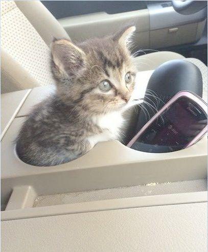 Kittens Craigslist Oc Kittens Suckling   Kittens cutest ...