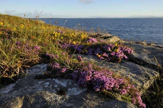Tout savoir sur les jardins de bord de mer