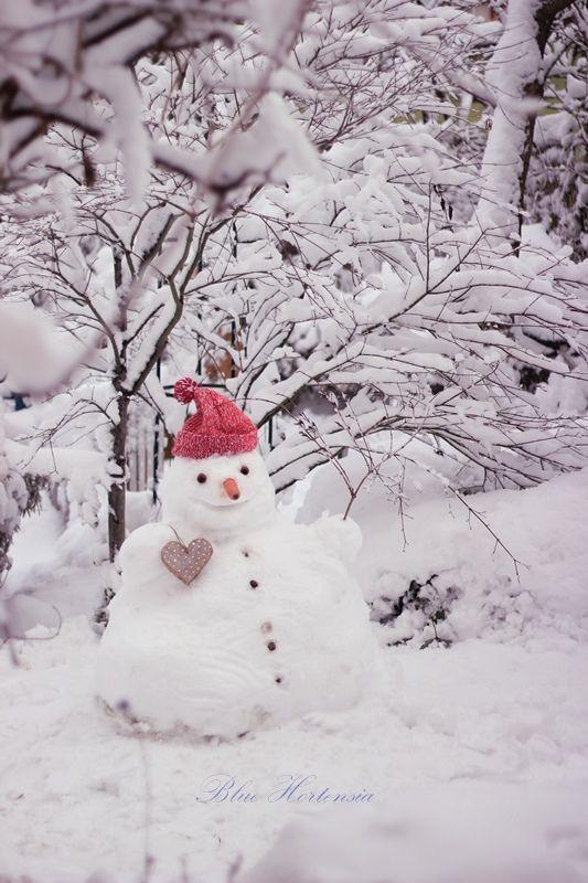 Blue Hortensia: Bewölkt, verschneiter Februar ..