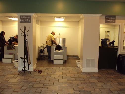 Lucky dawg pet grooming salon offers full service and self service lucky dawg pet grooming salon offers full service and self service dog and cat grooming services in a modern comfortable and spacious environment solutioingenieria Gallery