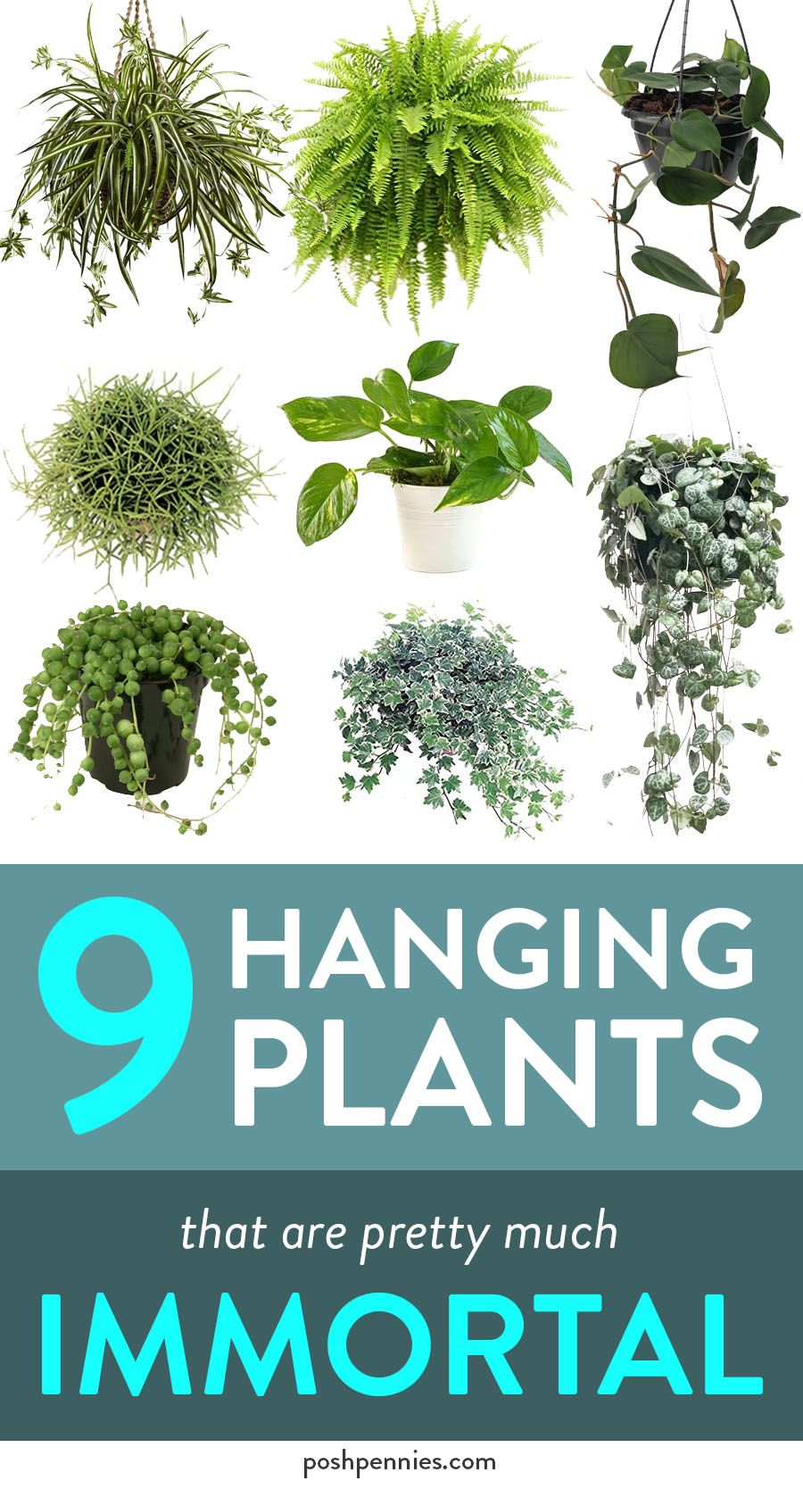9 Hanging Plants That Are Beautiful And E.A.S.Y.