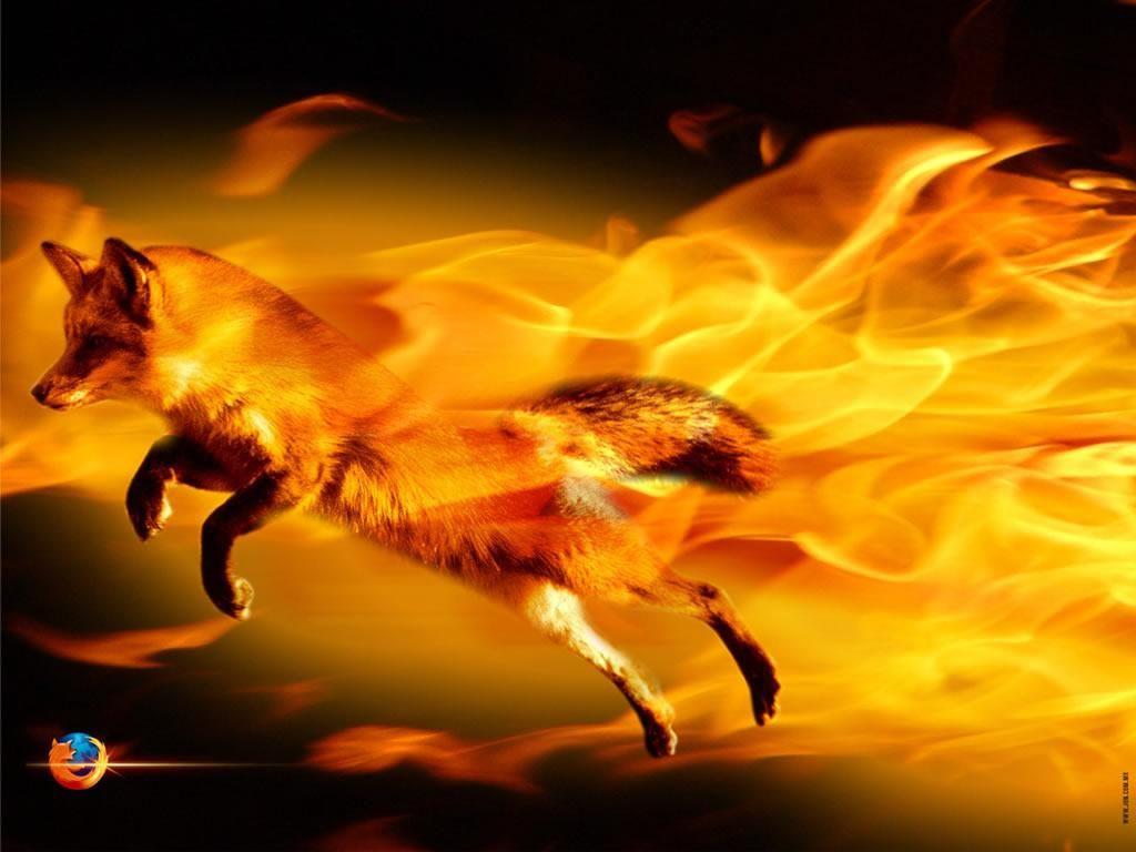 Raposa em chamas - Firefox Wallpaper