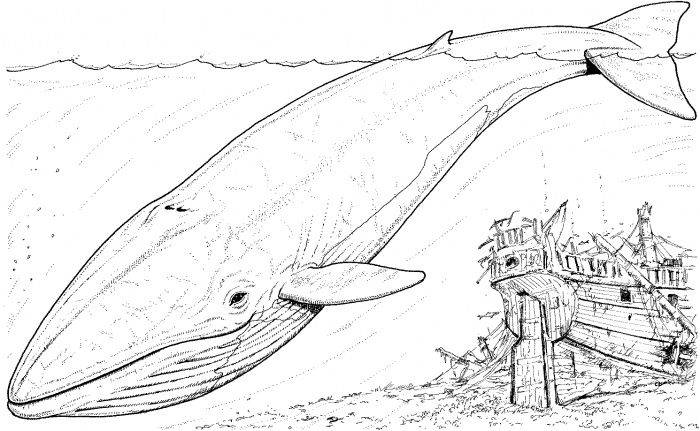 Blue Whale And Sinking Boat Coloring Page Super Coloring Whale Coloring Pages Whale Sketch Sea Animals Drawings