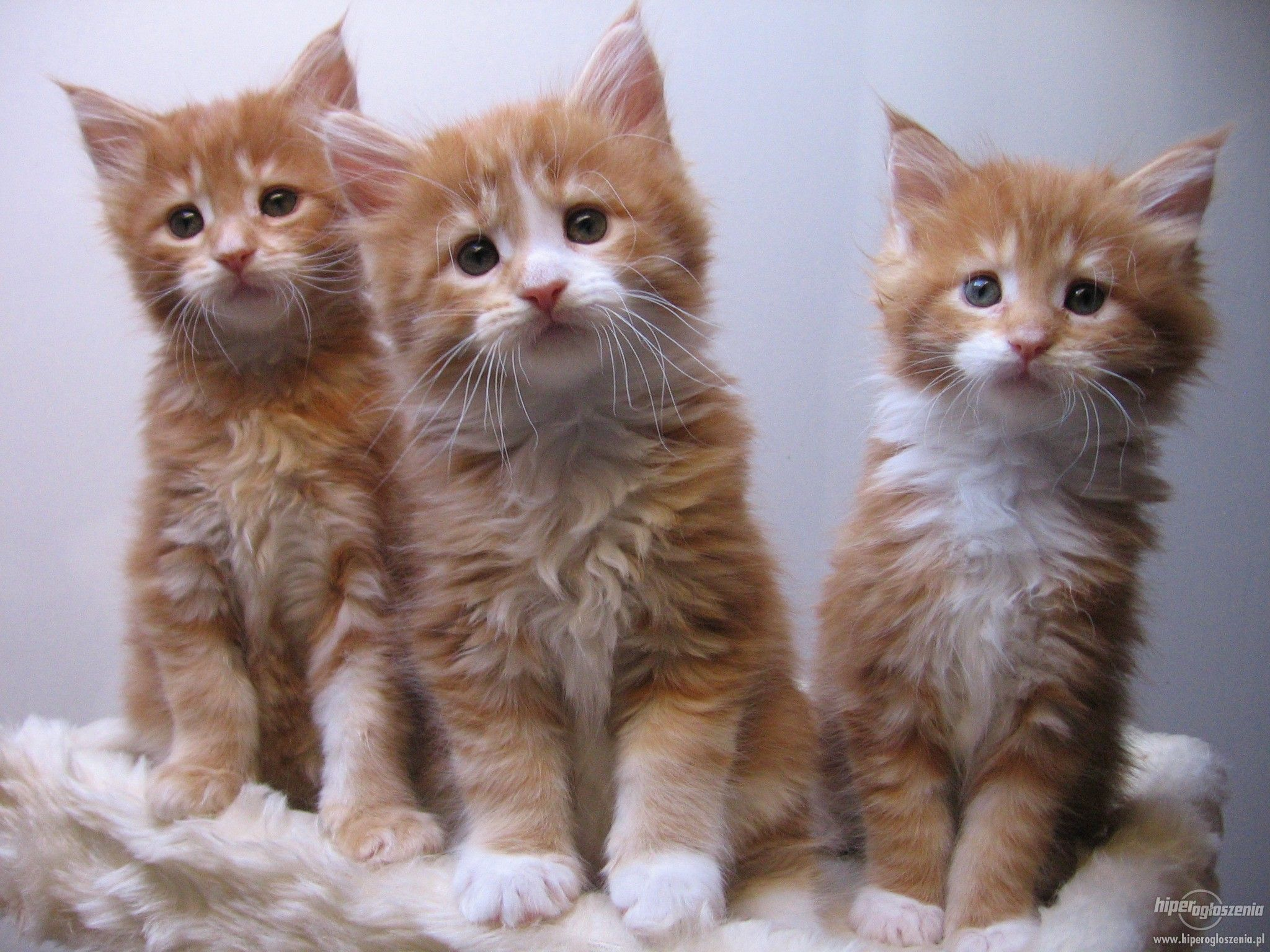 ce upon a time there were 3 kittens whose names were Mittens