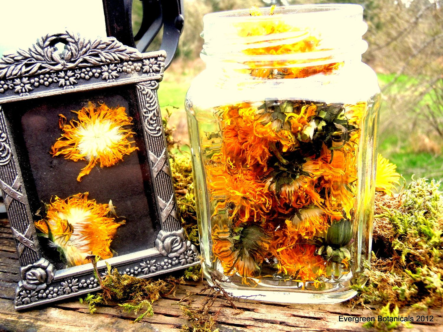 Wildcrafted Dandelion Flower Heads Dried By Evergreenbotanical 8 00 With Images Dandelion Flower Flowers Healing Tea