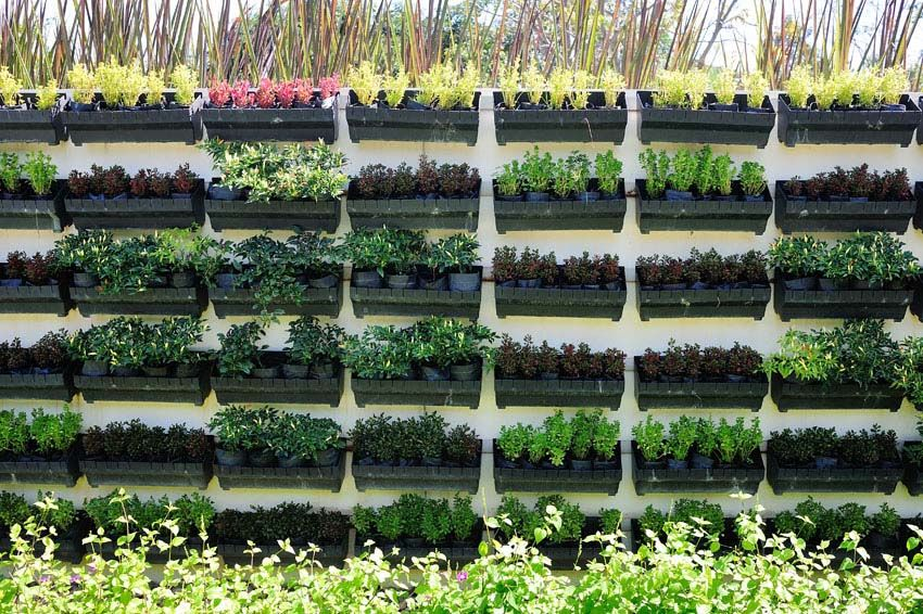 55 Best Vertical Garden Ideas (Planters & DIY Kits ...