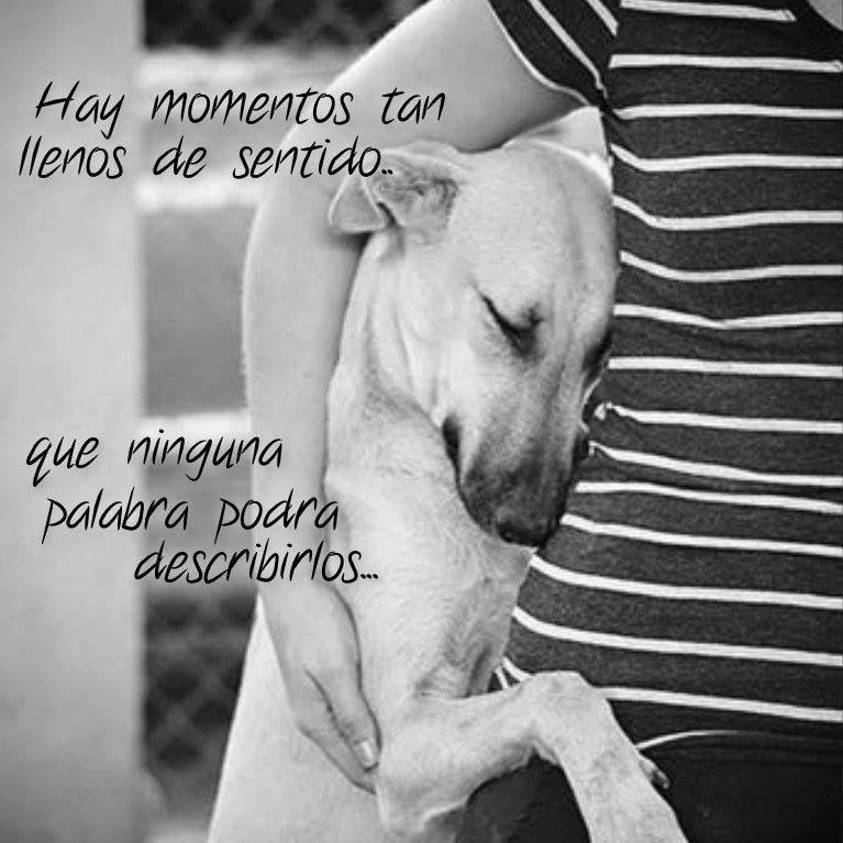 Refugioenalerta On Perros Frases Mama De Perro Animales Frases