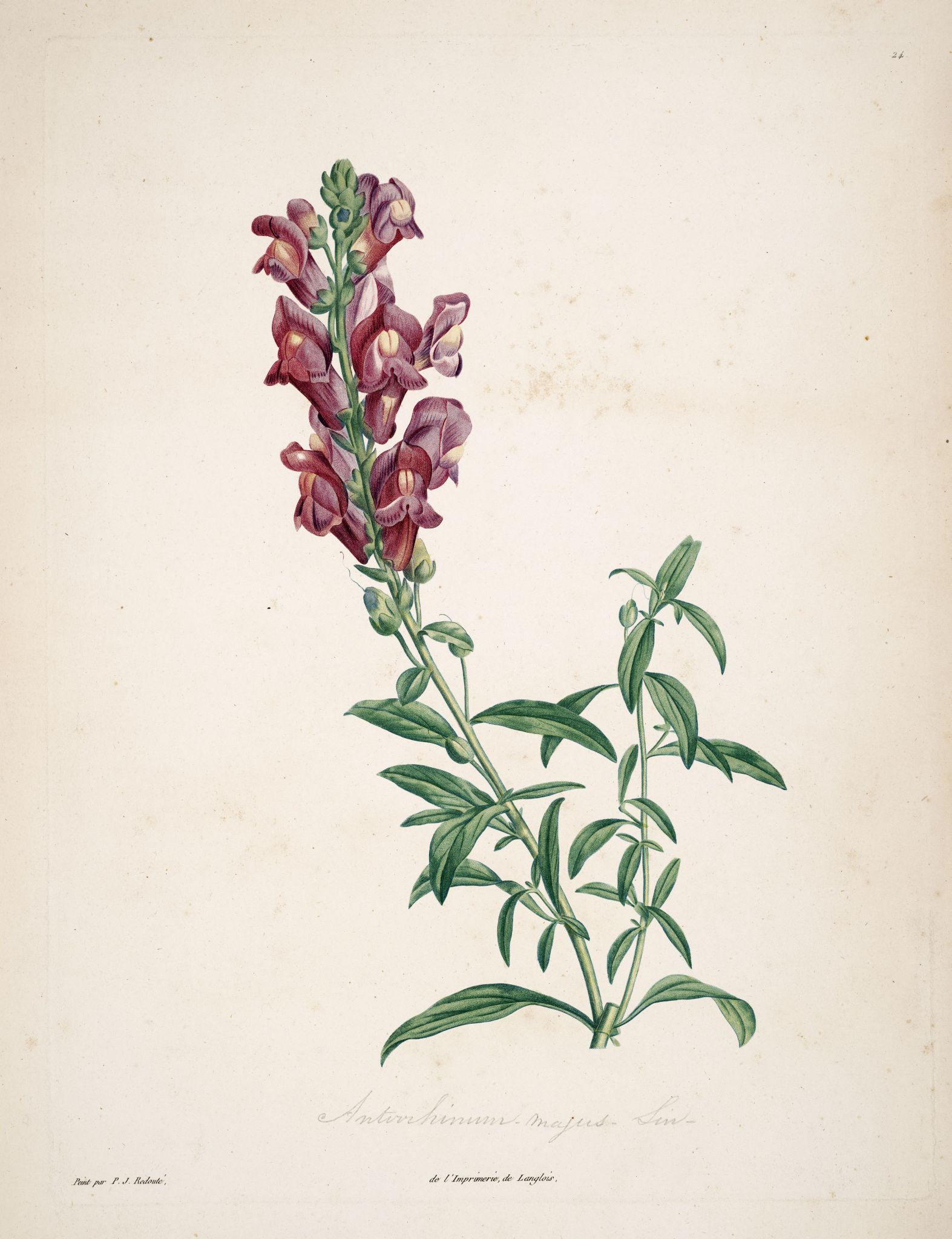 Gravures botanique rousseau gravures botanique rousseau for Botanic fleurs artificielles