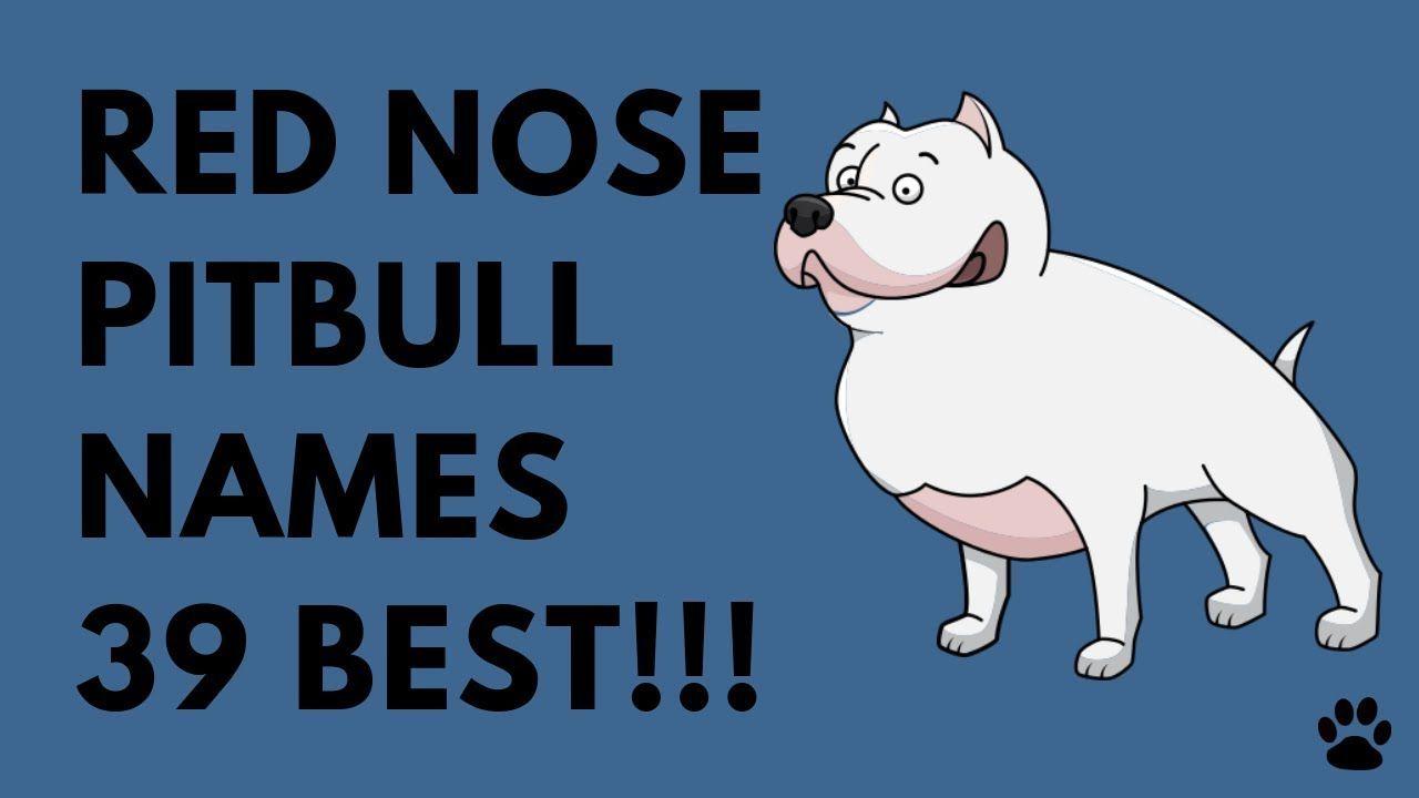 Red Nose Pitbull Names 39 Best Ideas Names Pitbull Names