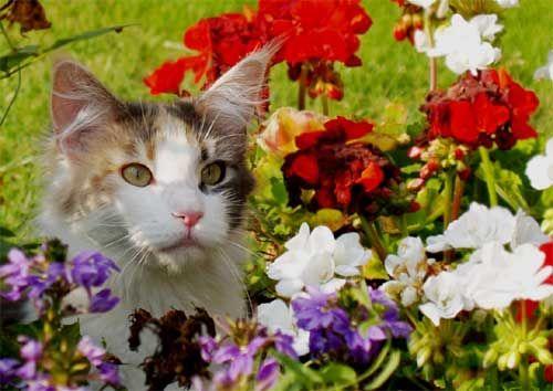 Animal de compagnie et fleurs