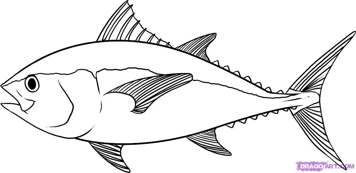 Line Drawing Of Fish : How to draw a tuna step by fish animals free