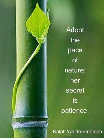 "Adopt the pace of nature: her secret is patience."" -Ralph Waldo Emerson -  Ralph Waldo Emerson 