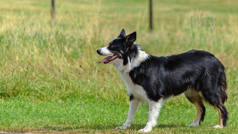 Hard Working Billed Dog Training For Obedience Pop Over To These