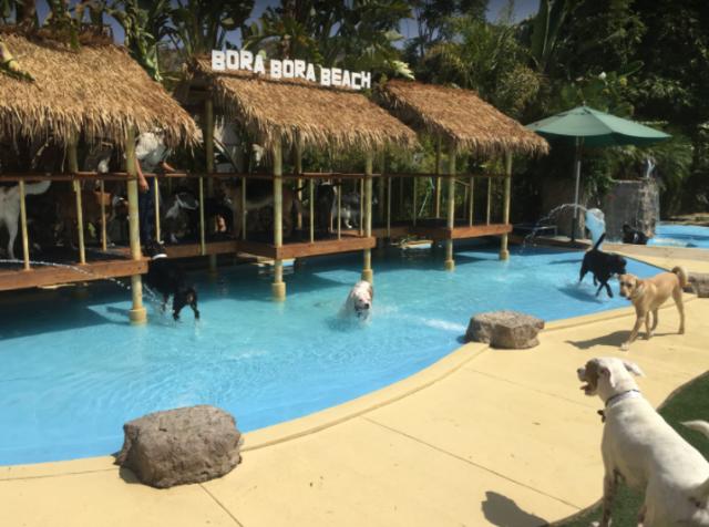 Photo Gallery In 2020 Pet Resort Resort Vacation Cottage
