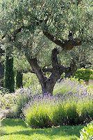 Reportage Jardin Provençal | Nathalie Pasquel L Gardens And Plants Photos