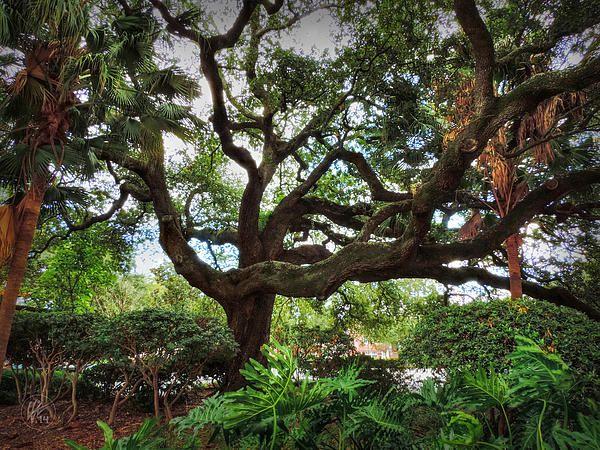 Nola Treme Congo Square 002 by Lance Vaughn Live oak