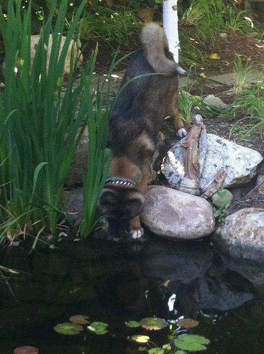 Bon The Mystic Water Gardens Mascot Enjoying A Refreshing Drink On A Hot Summer  Day. U2014