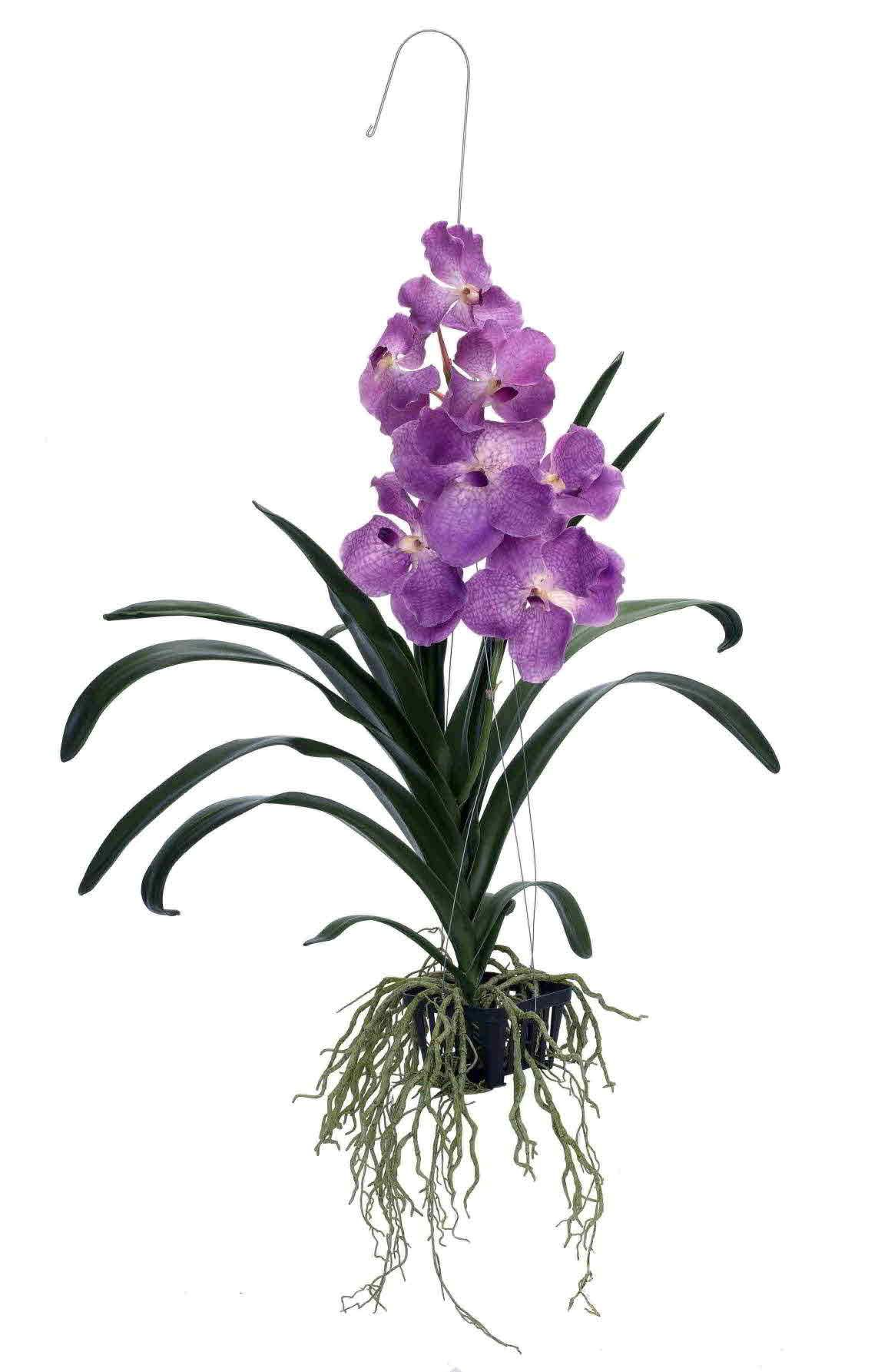 Hanging orchid My project today is to take all my orchids out of ...