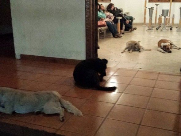 Stray Dogs Attend Funeral Of Woman Who Fed Them With Images Animals Dog Show