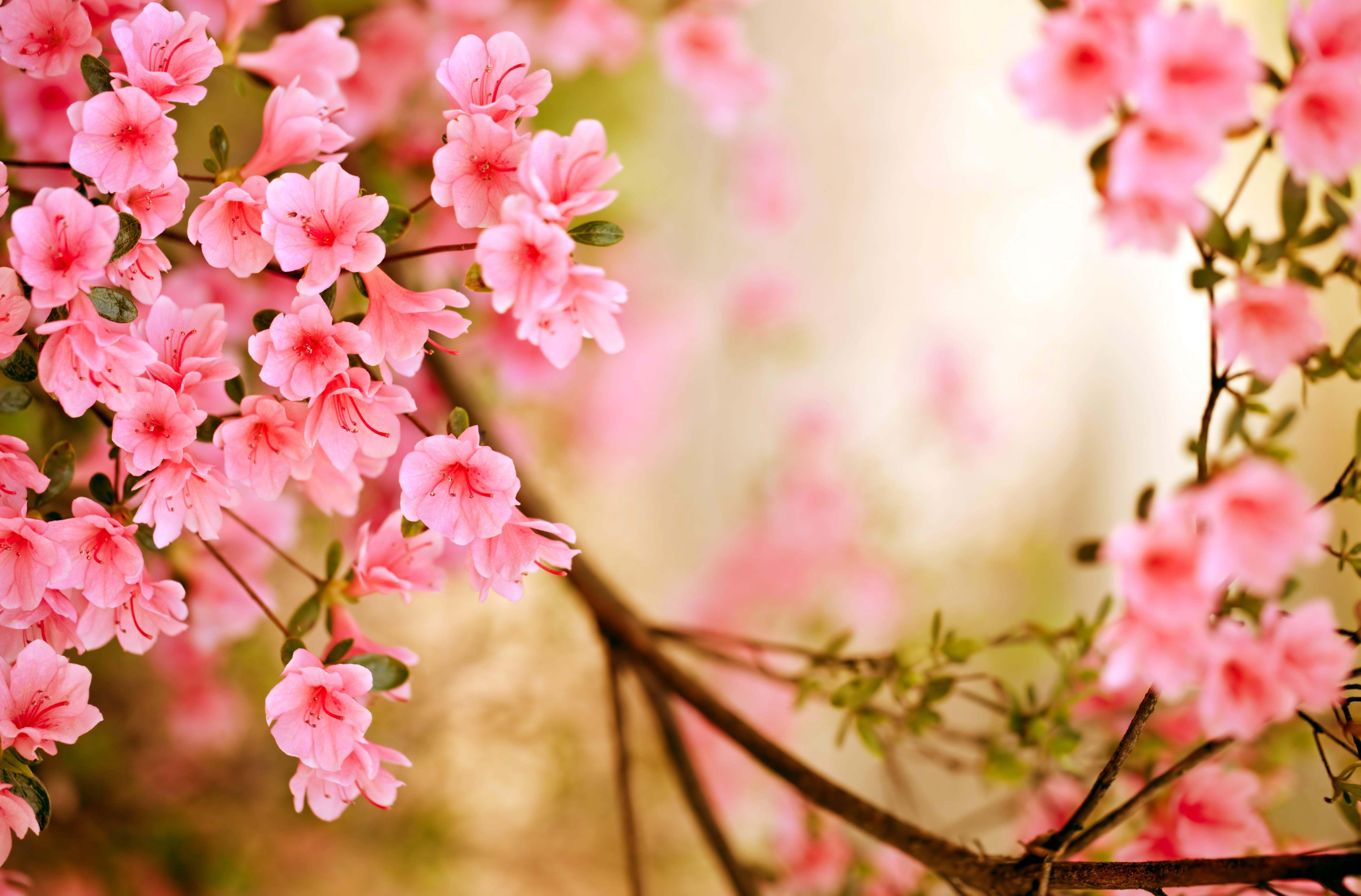 Spring Season Wallpapers Spring flowers images, Spring