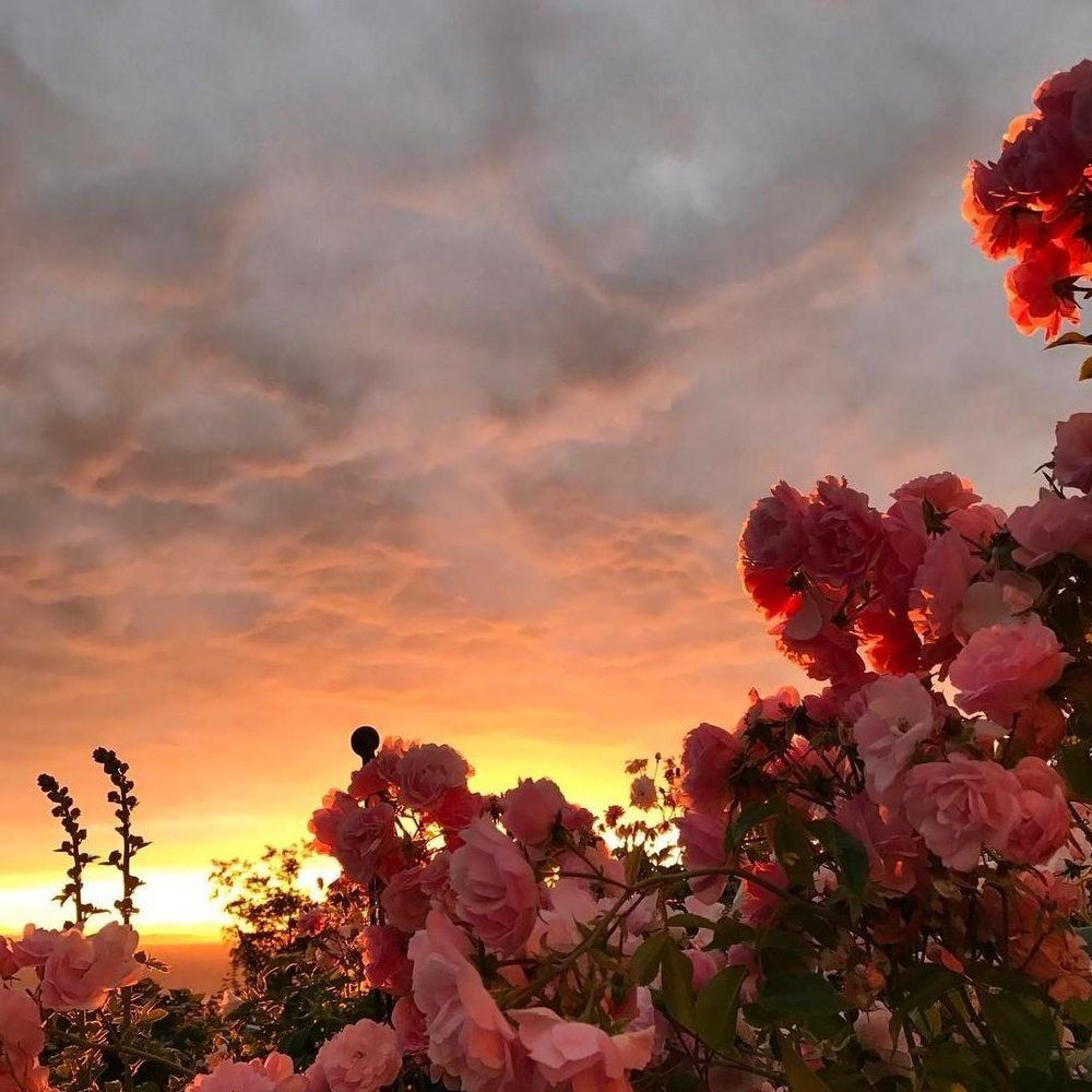 Download for free 60+ pink flower wallpapers. IMG_1400.JPG | Flower aesthetic, Aesthetic wallpapers ...