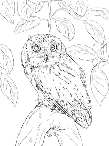 Eastern Screech Owl Coloring Page Bird Coloring Pages