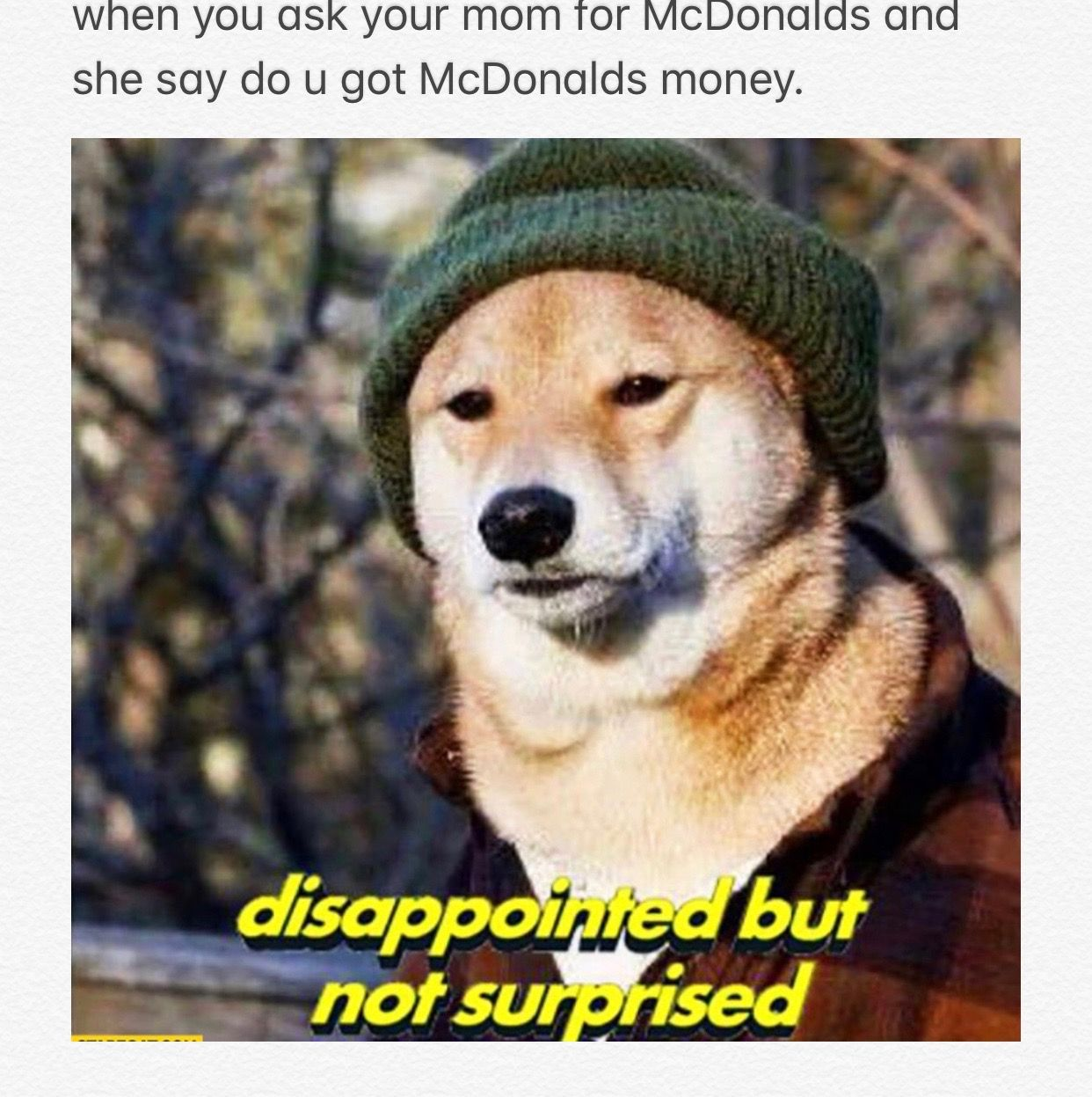 Pin by ♾Bri♾ on Relatable Funny animal memes, Funny dog