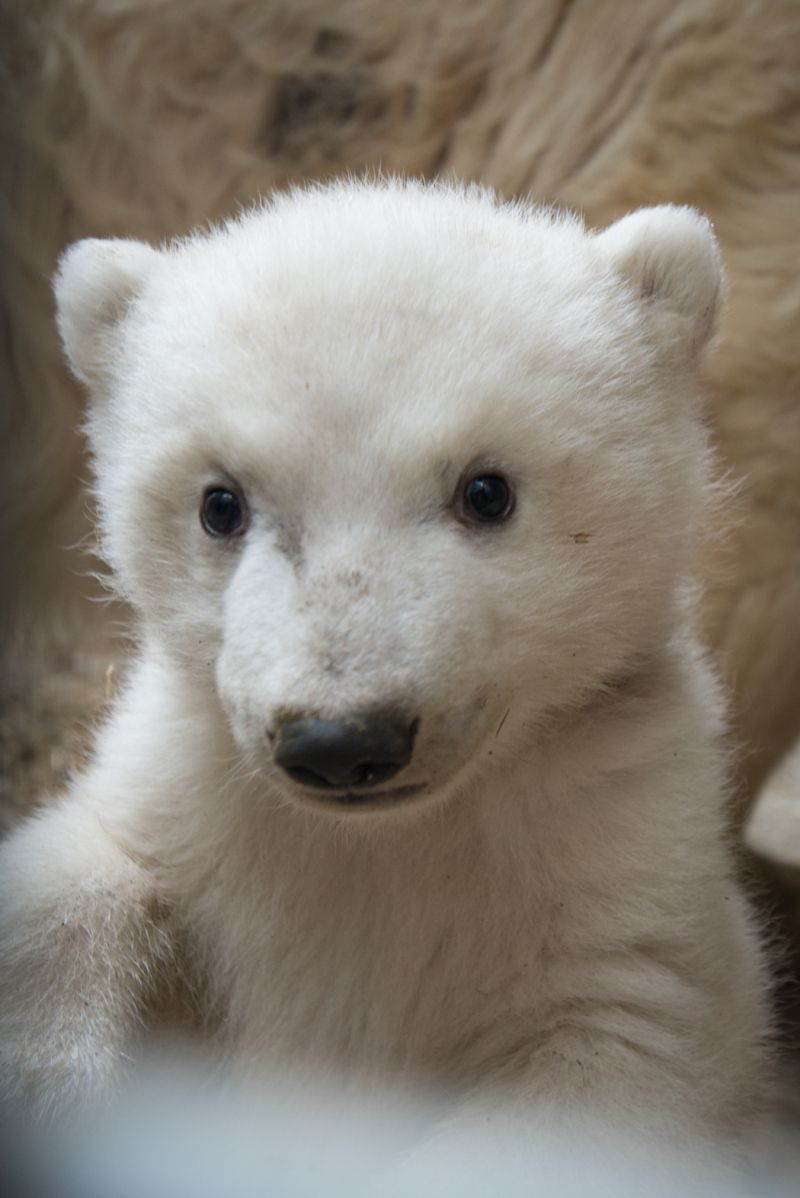 What Are Good Names For A Polar Bear