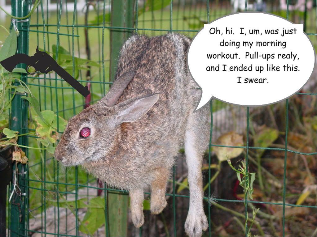 how to rabbit proof raised beds | Gardening | Raised beds, Rabbit