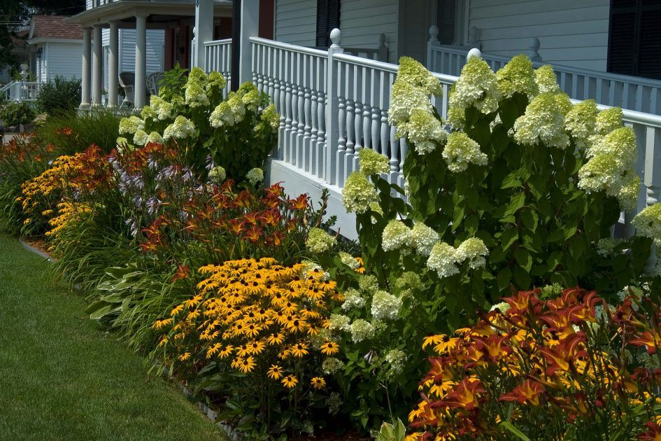 Garden Front Garden Design Ideas Flower Full Sun To Best Flowers For Direct Sunlight Yellow Perenni Hydrangea Landscaping Landscaping Shrubs Front Yard Plants