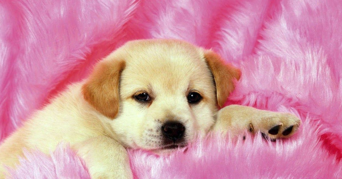 Download Cute Puppy Wallpapers Top Free Cute Puppy Backgrounds Download Cute Dog Backgrounds 52 Images Download Dog Cute Puppies Cute Dogs Dog Background