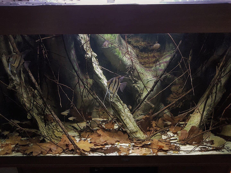 Aquadecor S Model E8 With Additional Logs Nature Aquarium Aquarium Backgrounds Biotope Aquarium