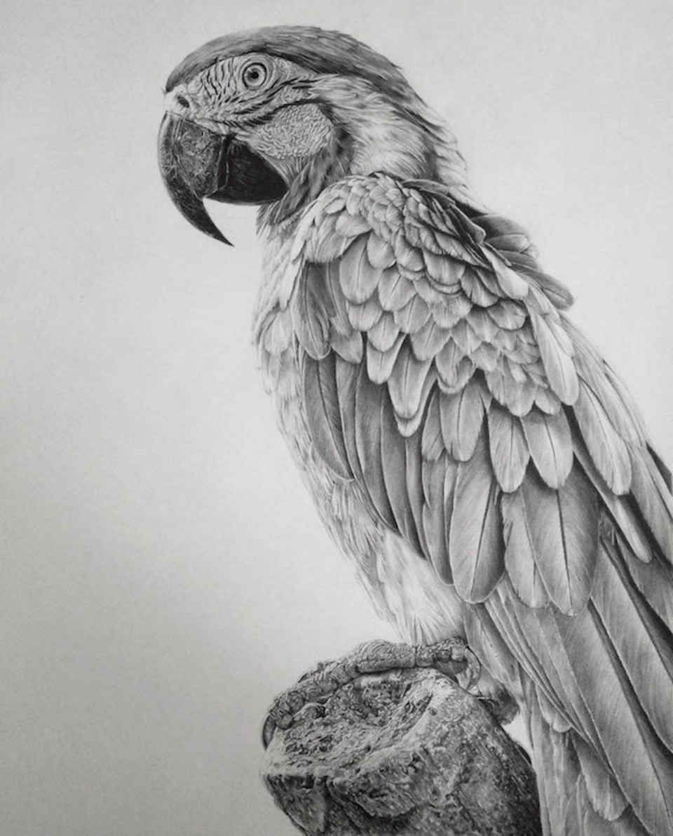 Amazingly Realistic Pencil Drawings By Monica Lee Realistic - Amazingly realistic pencil drawings monica lee