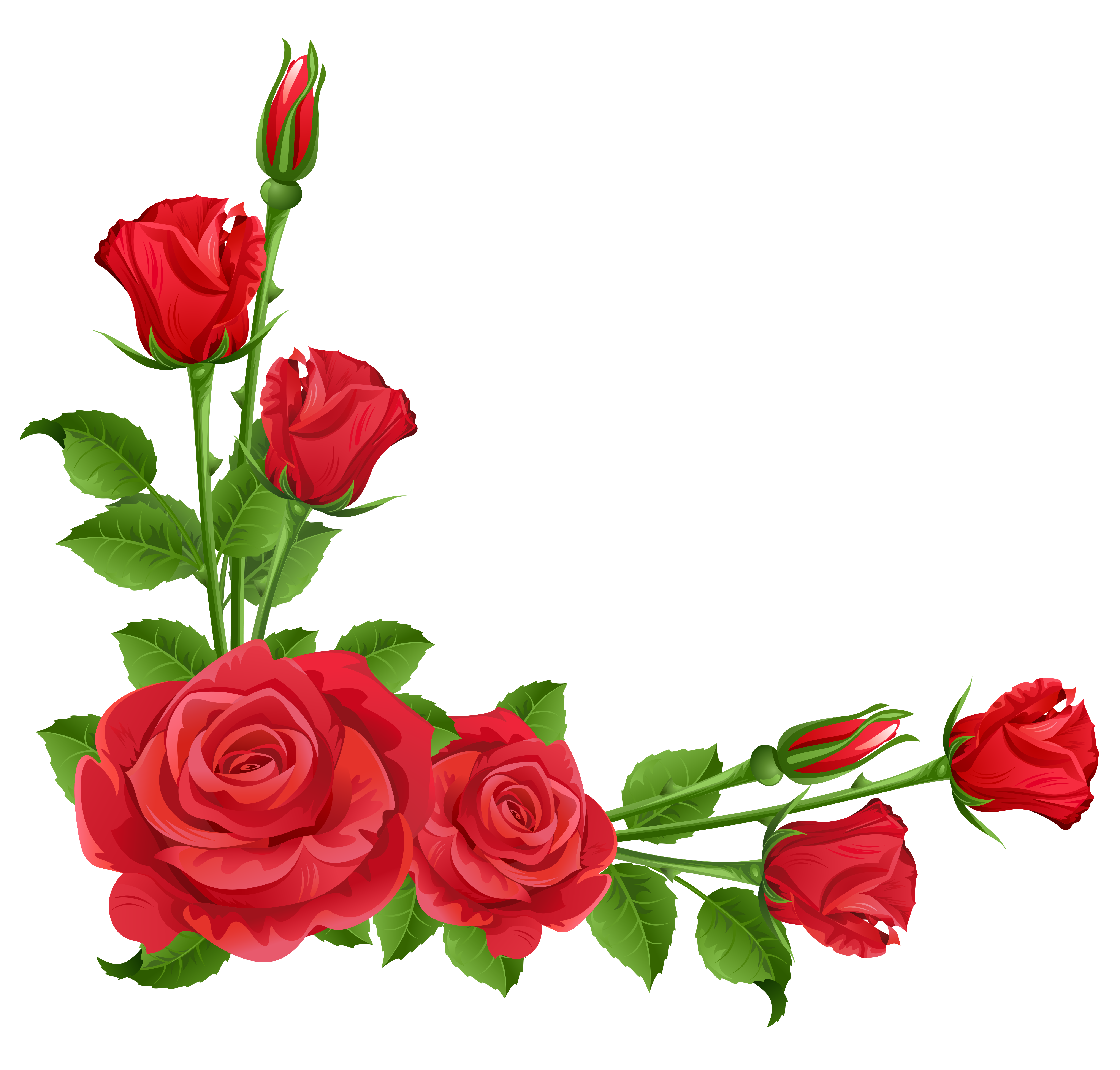 Red Roses Transparent Png Clipart Red Roses Clip Art Borders Beautiful Red Roses