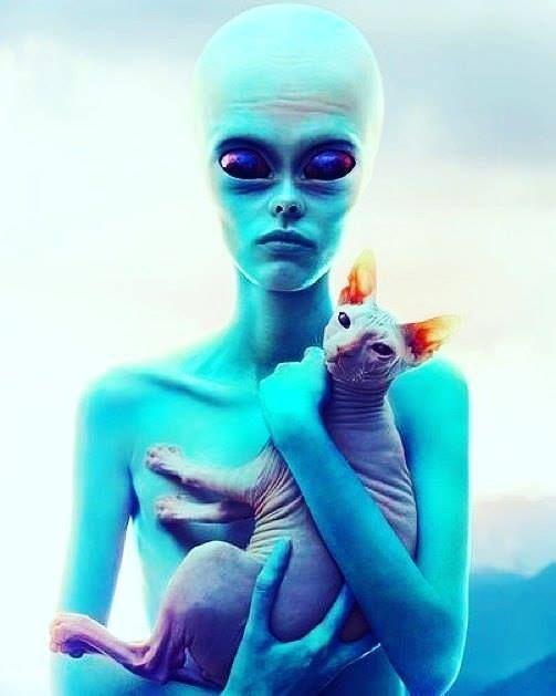 картинка инопланетянин внутри кота
