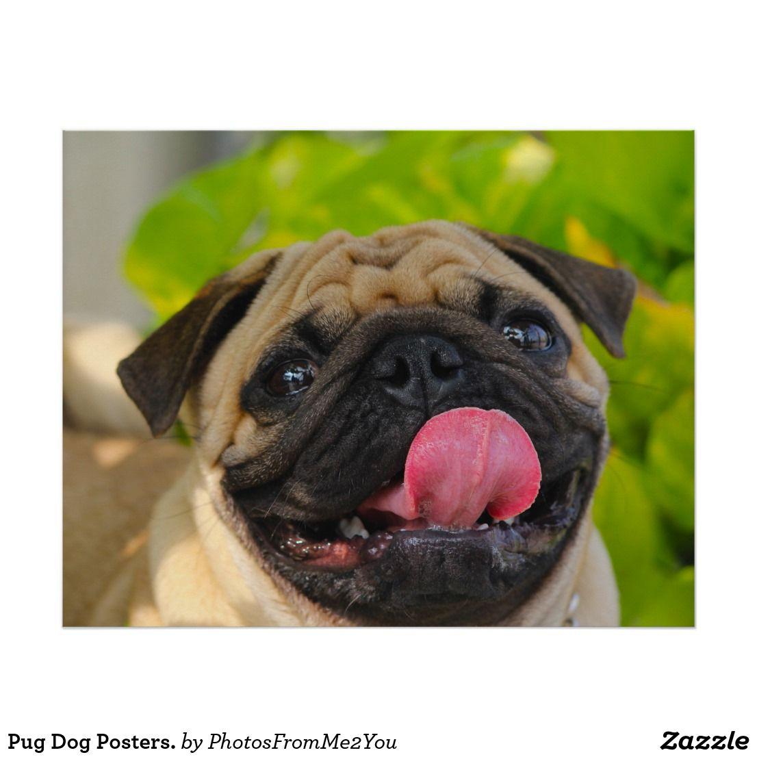 Pug Dog Posters Poster Dog Breeds Beautiful Dog Breeds Dog Poster