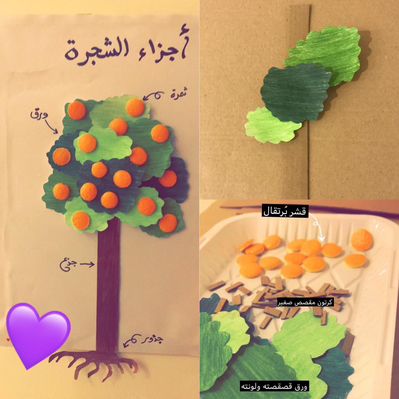 عمل فن ي تعليمي لـ شجرة البرتقال