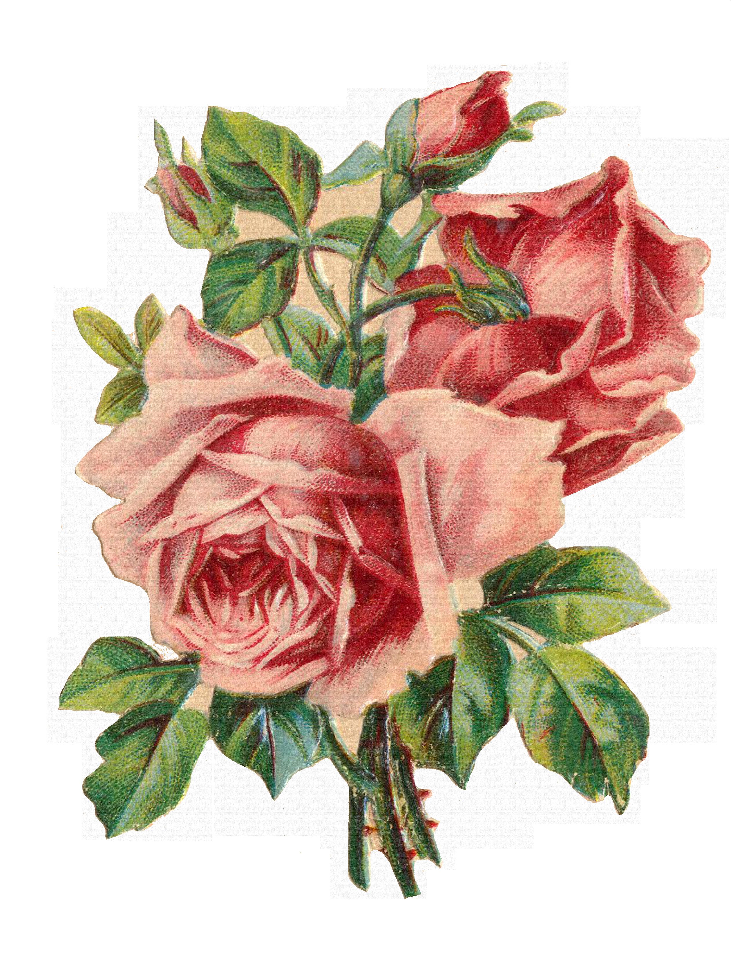 Винтажная роза открытка, годовщиной
