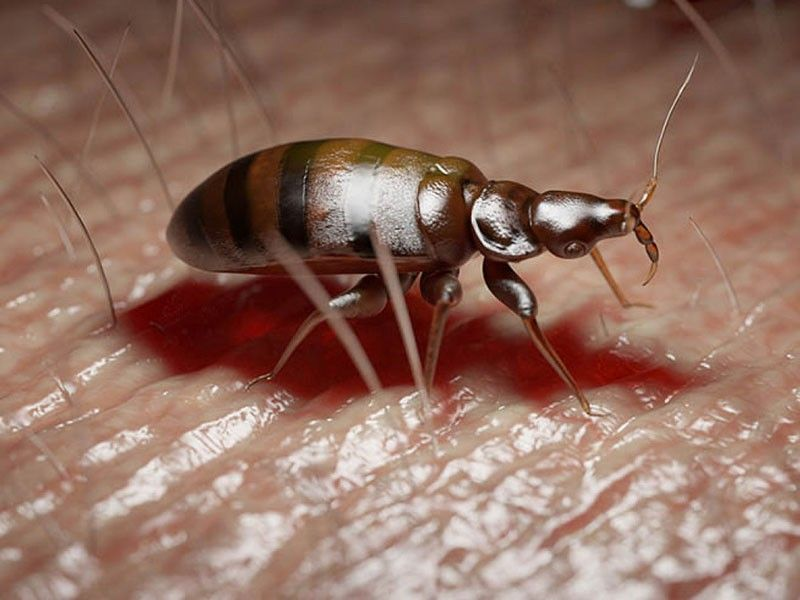 As The Name Of Our Organization We Offer Supreme Assurance From Bugs To Our Clients When They Employ Our Expert Kissing Bugs Warmer Re Bed Bugs Mcdonough Bugs