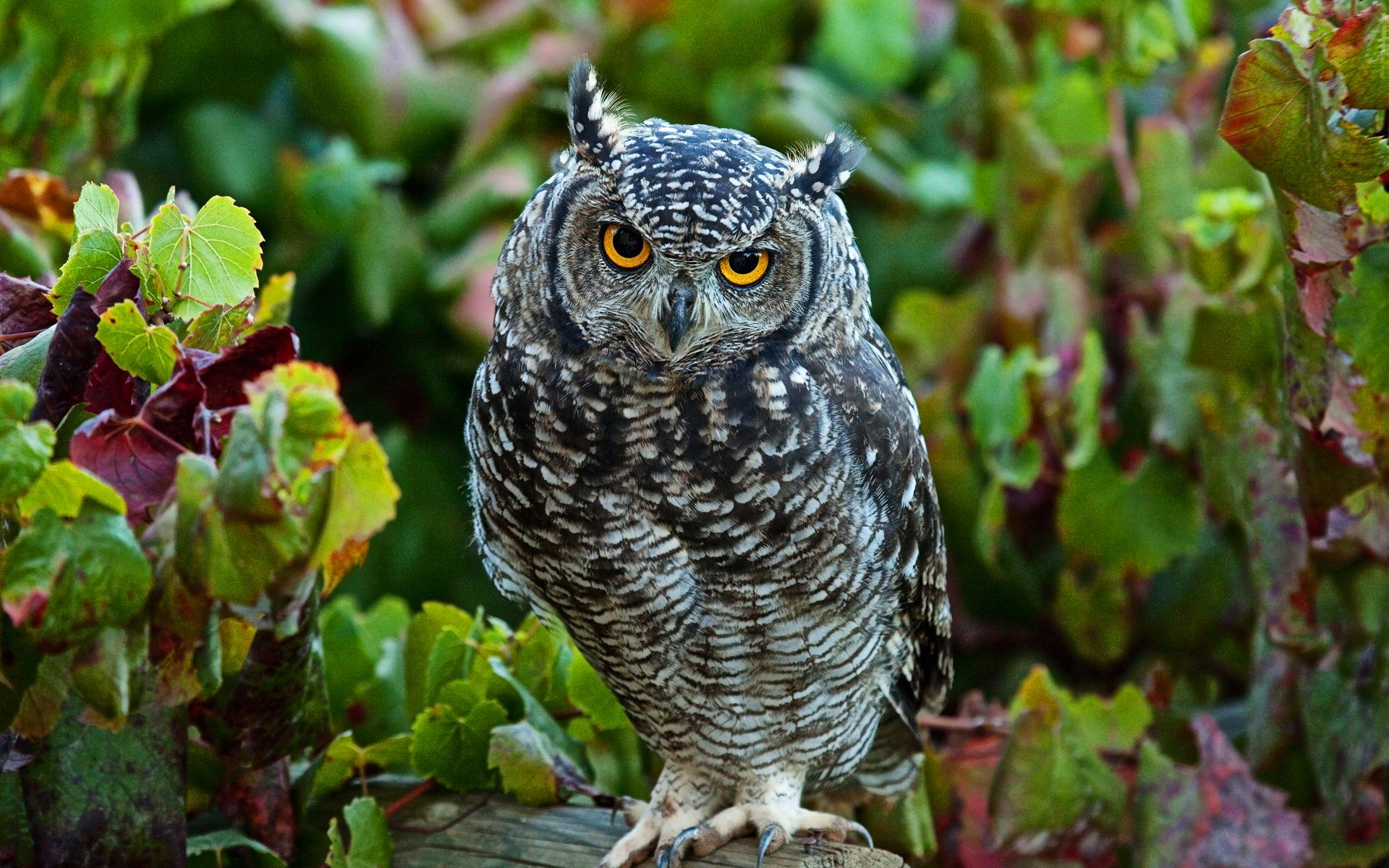 Cute owl wallpaper download widescreen wallpapers wallpaper cute owl wallpaper download widescreen wallpapers wallpaper background hd wallpapers and free voltagebd Gallery