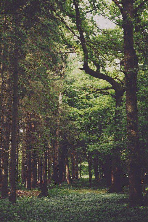 Bosque Alto