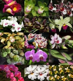 Various Orchid Flowers To Grow Indoors