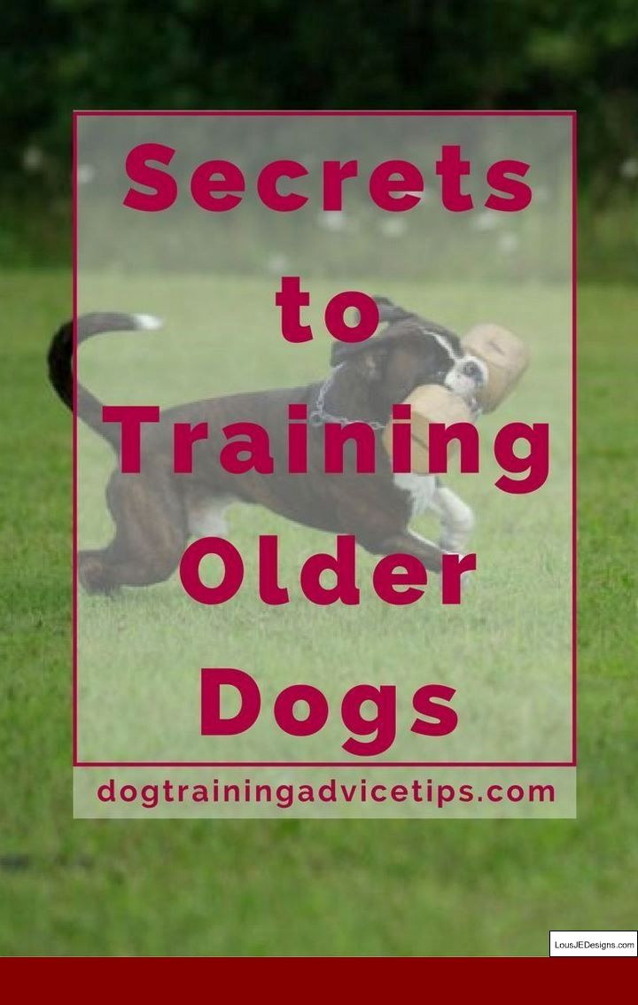 How To Train A Dog Not To Jump Cesar Millan And Pics Of How To