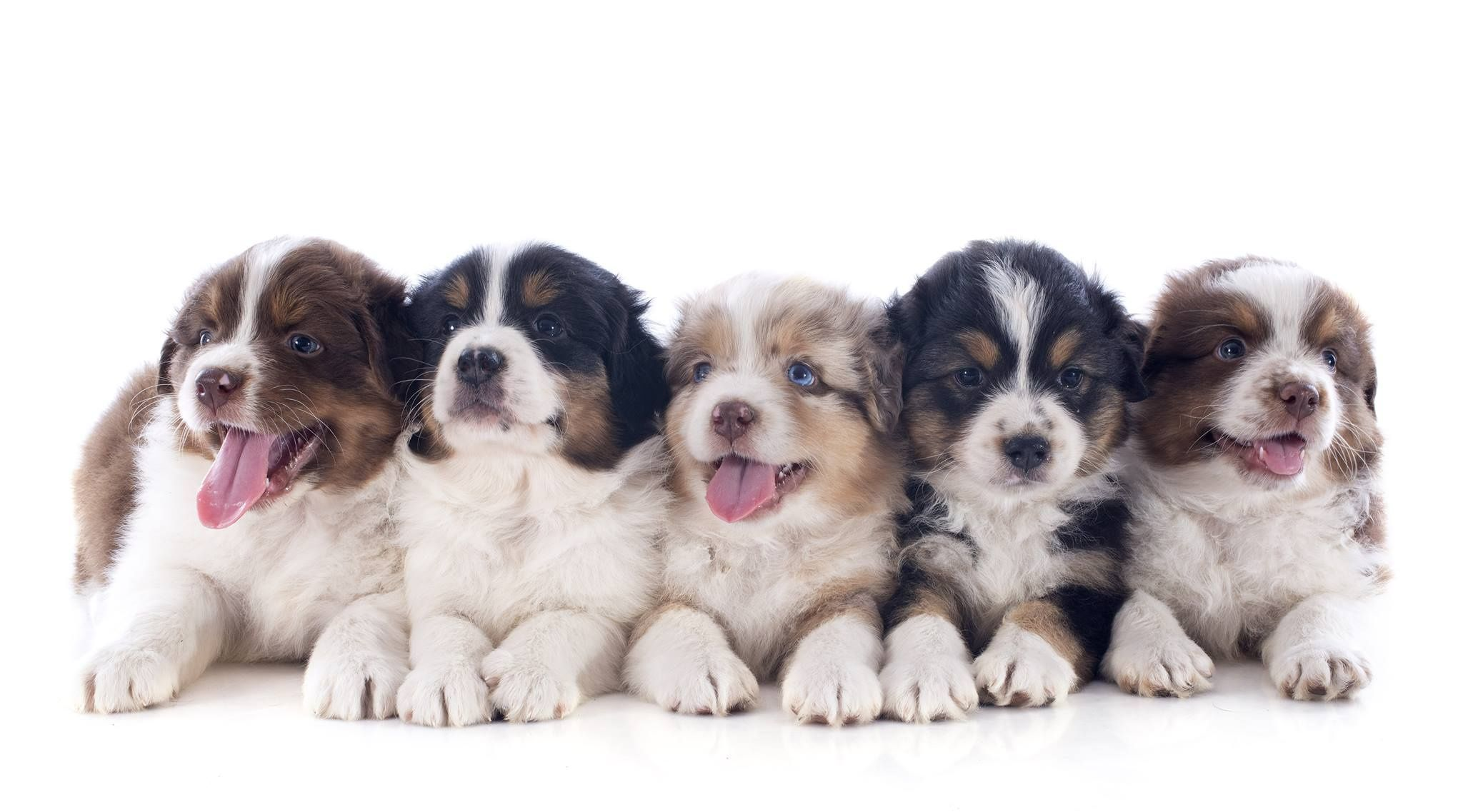Corgi Puppies For Sale In Evansville Indiana References