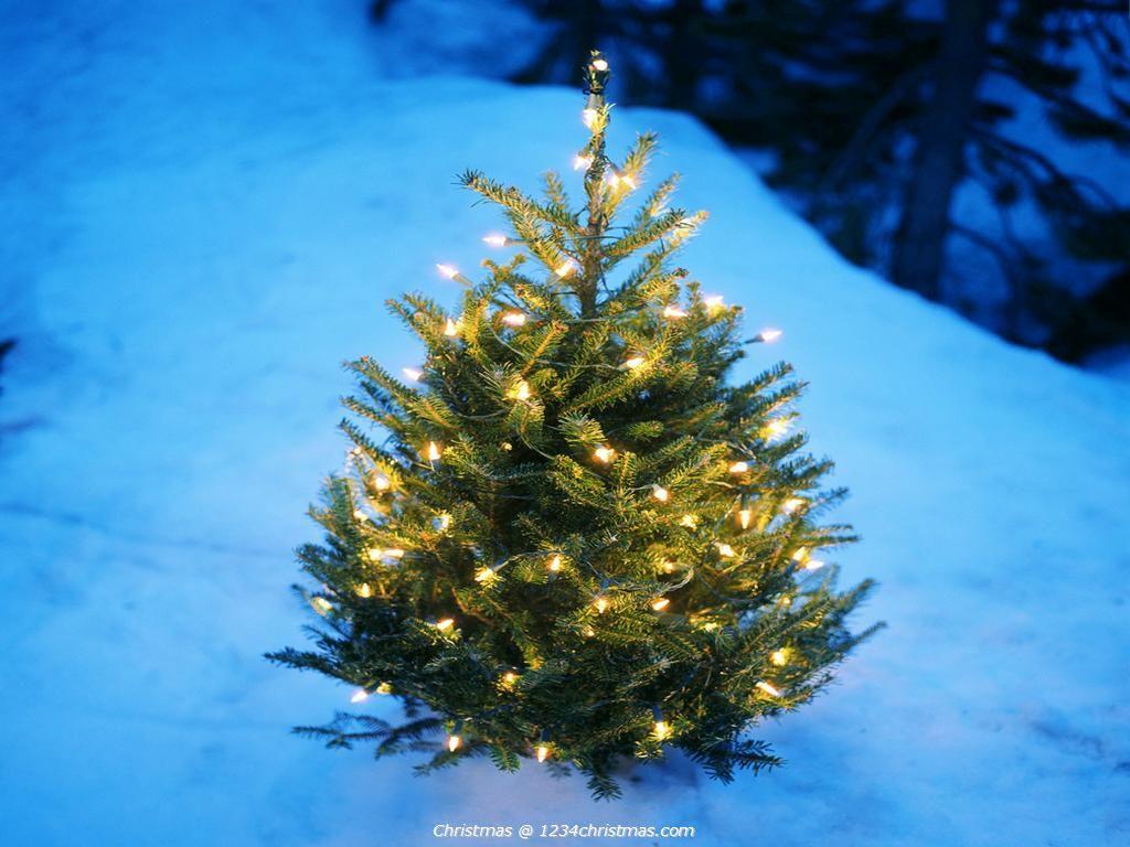 White Christmas Tree Desktop Wallpaper