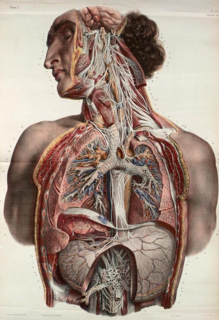Nicolas Henry Jacob | YQ | Pinterest | Anatomía, Medicina y ...
